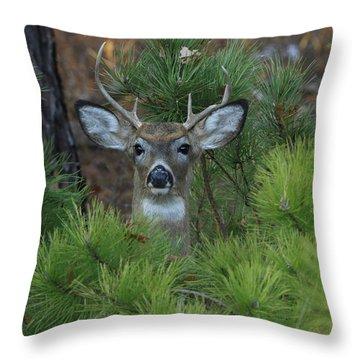 White Tailed Deer Calverton New York Throw Pillow