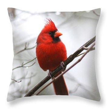 4772-001 - Northern Cardinal Throw Pillow by Travis Truelove