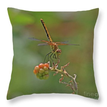 Band-winged Meadowhawk Throw Pillow