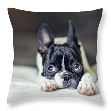 Boston Terrier Puppy Throw Pillow by Nailia Schwarz
