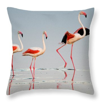 Greater Flamingos Phoenicopterus Roseus Throw Pillow by Panoramic Images