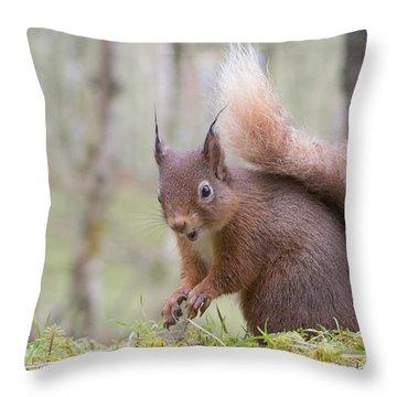 Red Squirrel - Scottish Highlands #8 Throw Pillow