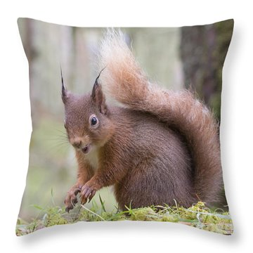 Red Squirrel - Scottish Highlands #8 Throw Pillow