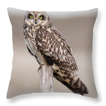 Short Eared Owl Throw Pillow by Ian Hufton