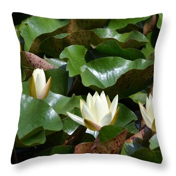 5 Water Lilies Opening Throw Pillow by Kathleen Stephens