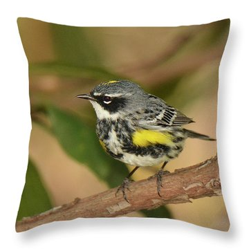Yellow-rumped Warbler Throw Pillow by Alan Lenk