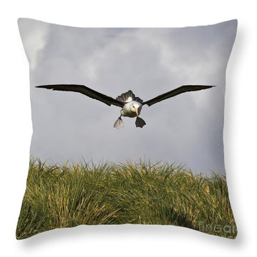 Black-browed Albatross Throw Pillow by Jean-Louis Klein & Marie-Luce Hubert