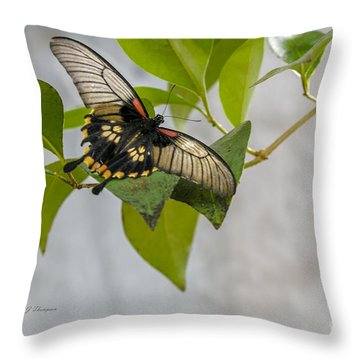 Throw Pillow featuring the photograph Butterfly by Richard J Thompson