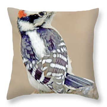 Throw Pillow featuring the photograph Downy Woodpecker Male On Tree Limb by A Gurmankin