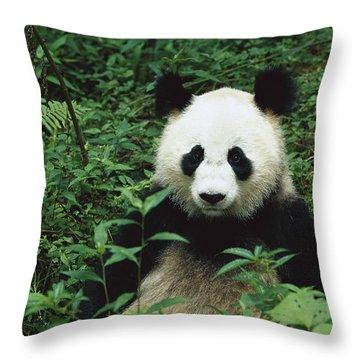 Giant Panda Ailuropoda Melanoleuca Throw Pillow by Cyril Ruoso
