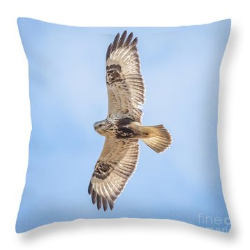 Rough-legged Hawk Throw Pillow