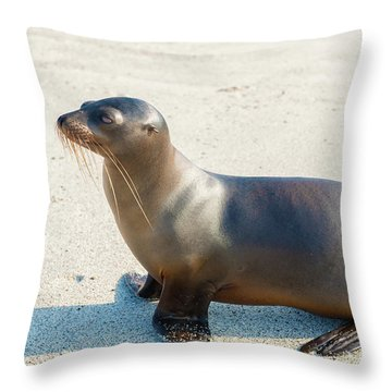 Sea Lion In Galapagos Islands Throw Pillow