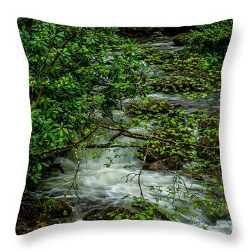 Throw Pillow featuring the photograph Kens Creek Cranberry Wilderness by Thomas R Fletcher