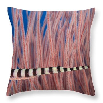 Malaysia, Marine Life Throw Pillow by Dave Fleetham - Printscapes