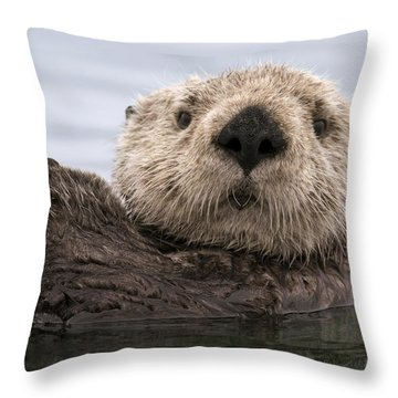 Sea Otter Elkhorn Slough Monterey Bay Throw Pillow by Sebastian Kennerknecht