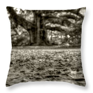 Angel Oak Live Oak Tree Throw Pillow by Dustin K Ryan