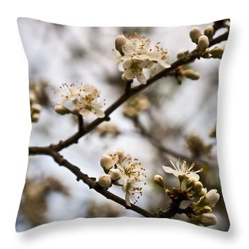 Throw Pillow featuring the photograph Blackthorn Blossom by David Isaacson