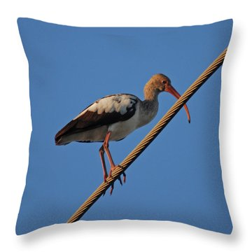 Throw Pillow featuring the photograph 8- Brown Ibis by Joseph Keane