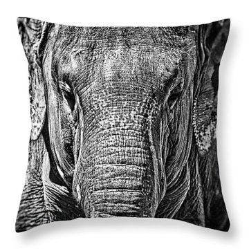 Elephant Collection Throw Pillow