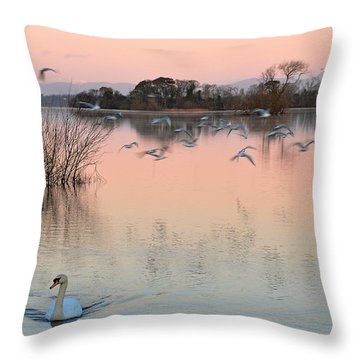 Throw Pillow featuring the photograph Morning Glory by Barbara Walsh
