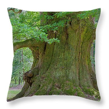 800 Years Old Oak Tree  Throw Pillow by Heiko Koehrer-Wagner