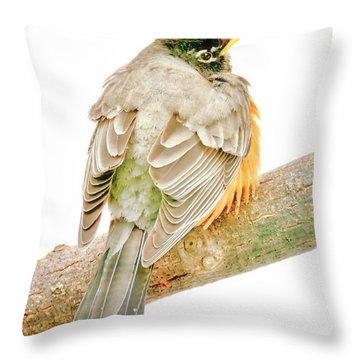 American Robin Male, Animal Portrait Throw Pillow
