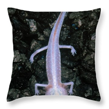 Austin Blind Salamander Throw Pillow