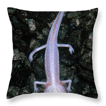 Austin Blind Salamander Throw Pillow by Dante Fenolio
