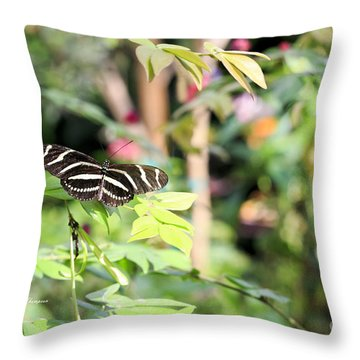 Throw Pillow featuring the photograph Zebra Longwings Butterfly by Richard J Thompson