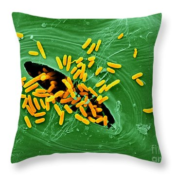 Sem Of E. Coli Bacteria On Lettuce Throw Pillow