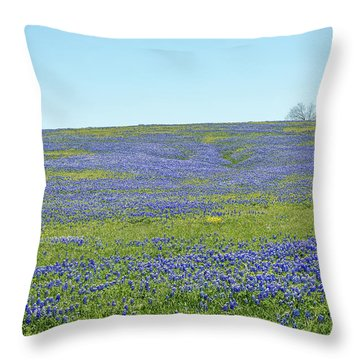Texas Bluebonnets 12 Throw Pillow