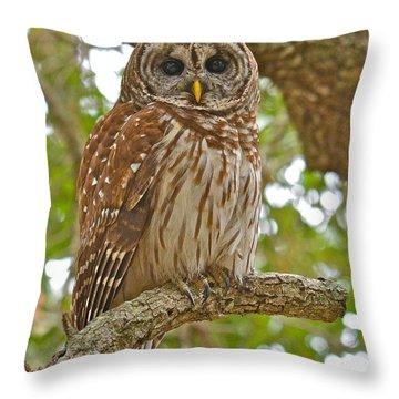A Barred Owl Throw Pillow