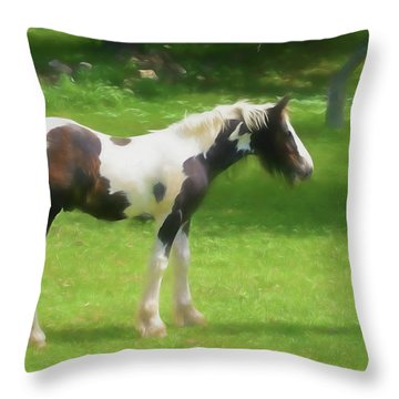 A Beautiful Young Gypsy Vanner Standing In The Pasture Throw Pillow