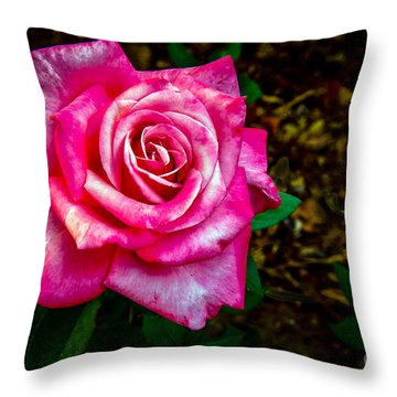 A Bicolor Rose Throw Pillow