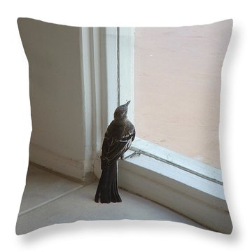 A Bird At A Plate Glass Window Throw Pillow by Stan  Magnan