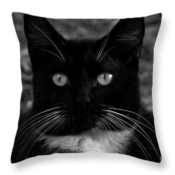 A Black Cat's Life -florida Throw Pillow