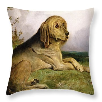 A Bloodhound In A Landscape Throw Pillow by English school