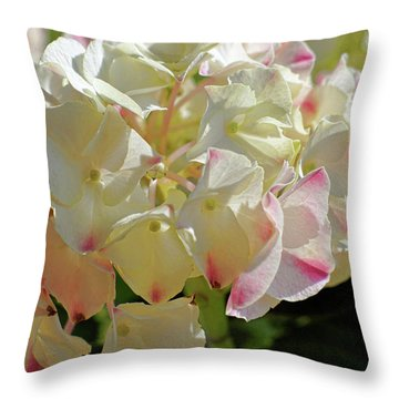 Throw Pillow featuring the photograph A Blush Of Pink by Cricket Hackmann