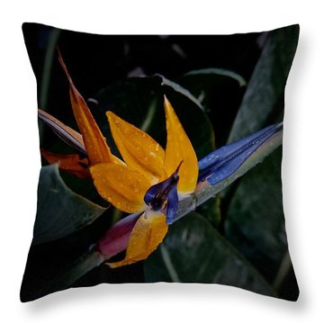 A Bright Blooming Bird Throw Pillow by Tim Good