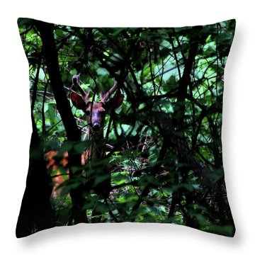 A Buck Peers From The Woods Throw Pillow