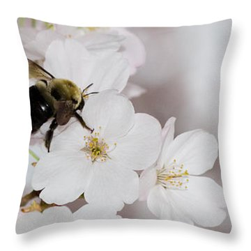 A Bumblebee Pollinates A Cherry Blossom Throw Pillow