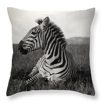 A Burchells Zebra At Rest Throw Pillow