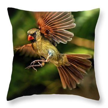 A Cardinal Approaches Throw Pillow