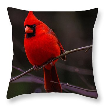 A Cardinal In January  Throw Pillow