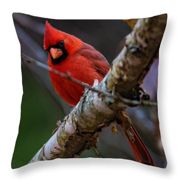 A Cardinal In Spring   Throw Pillow