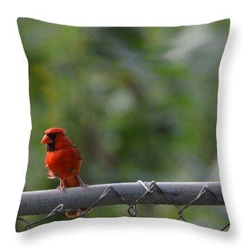 A Cardinal On A Fence Throw Pillow