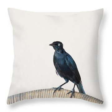 A Carib Grackle (quiscalus Lugubris) On Throw Pillow by John Edwards