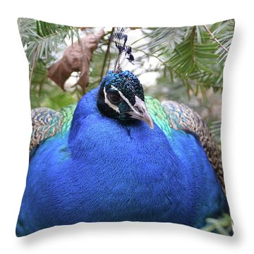 A Close Up Look At A Blue Peafowl Throw Pillow