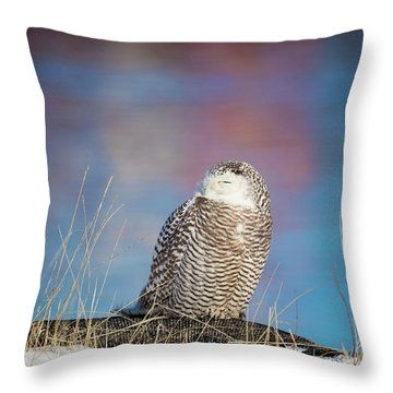 A Colorful Snowy Owl Throw Pillow