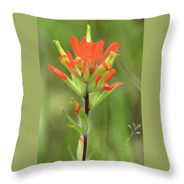 Throw Pillow featuring the photograph A Common Michigan Flower by Sally Sperry